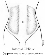 Internal Oblique